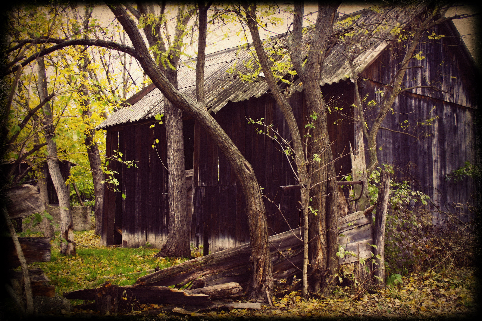Nora6: Cabin in the woods