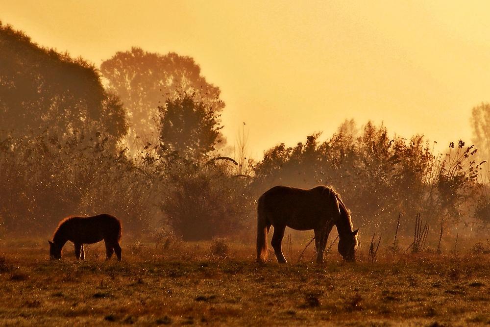 Imbelele: Hajnali legelők