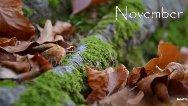 dri: November 2560x1440 - indafoto.hu