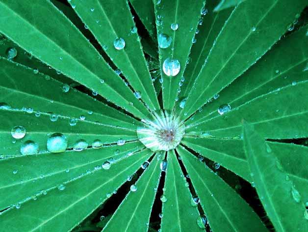 esővízgyűjtő