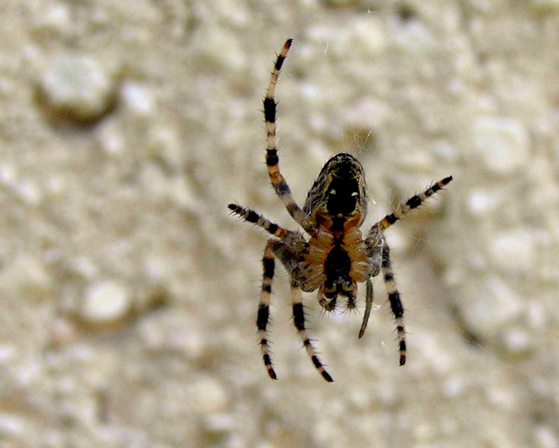 pók a falon