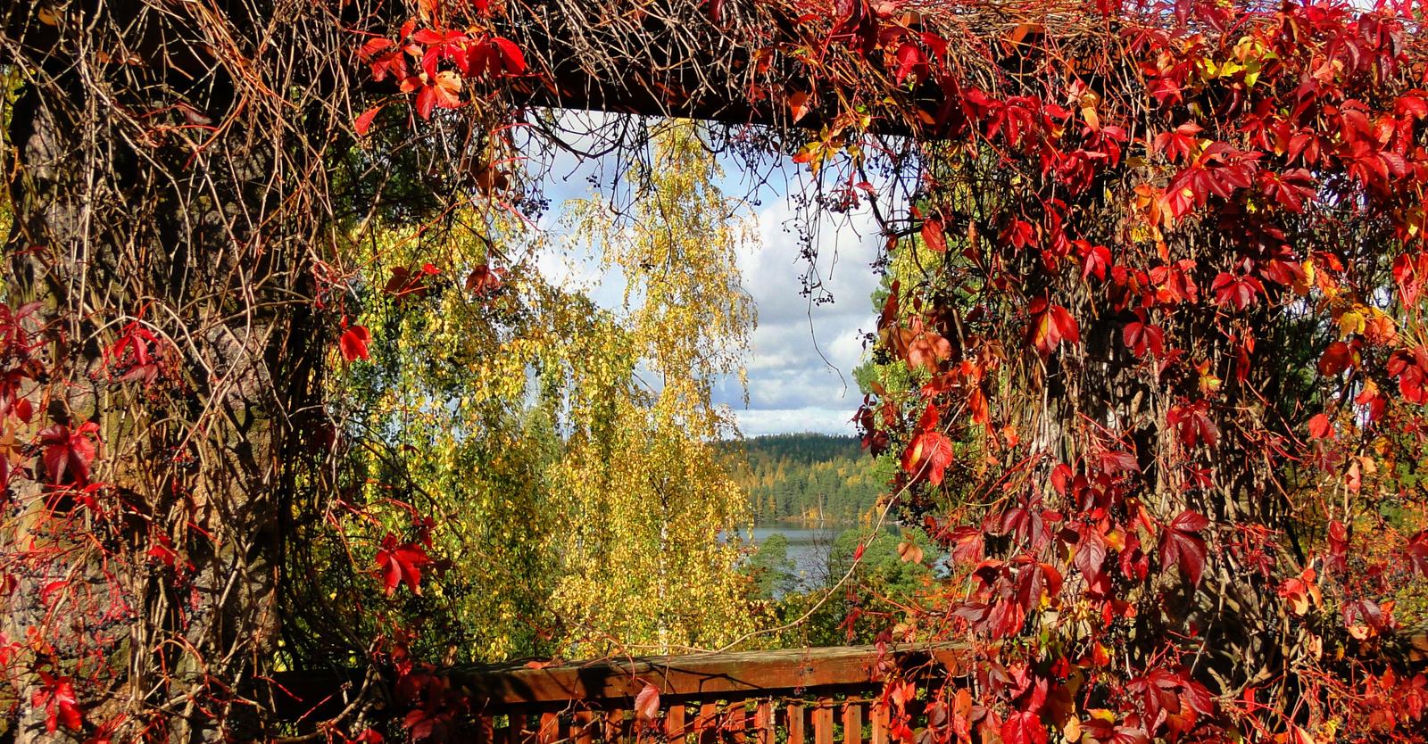 Az ősz ablaka