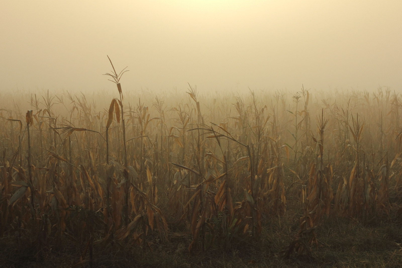serko: októberi csend
