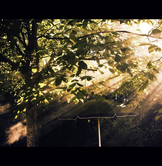 szusi: Sugarak a kertemben