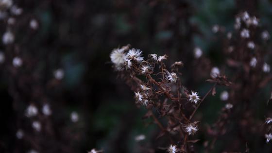 robinn25: white flowers