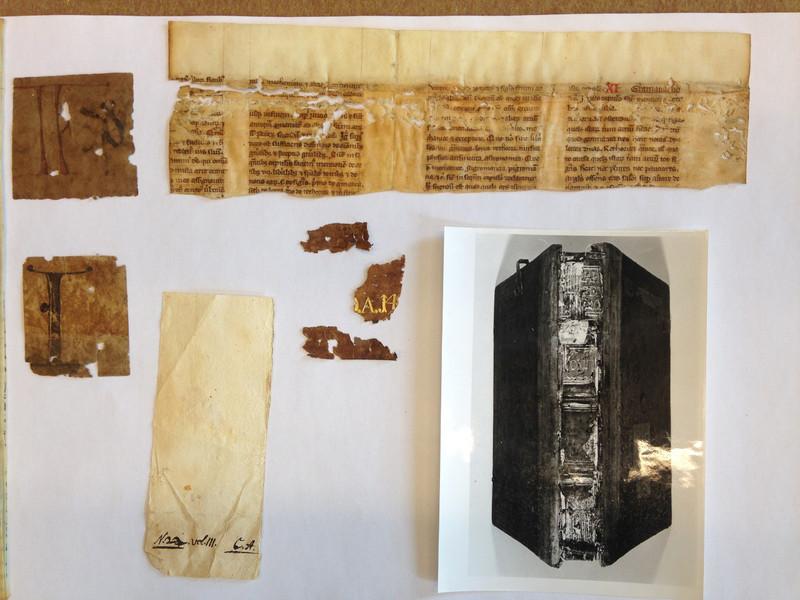 Capreolus-kötetről lefejtett bőrmaradványok