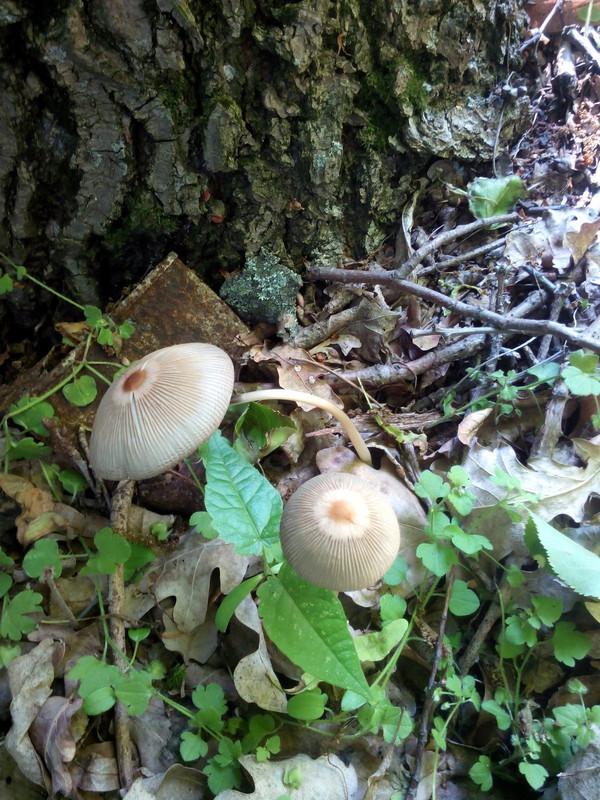 És itt kicsit belém állt a lefelénézés. Azt mondják valami áltitagomba. Én a gombákat csak tisztelem :P