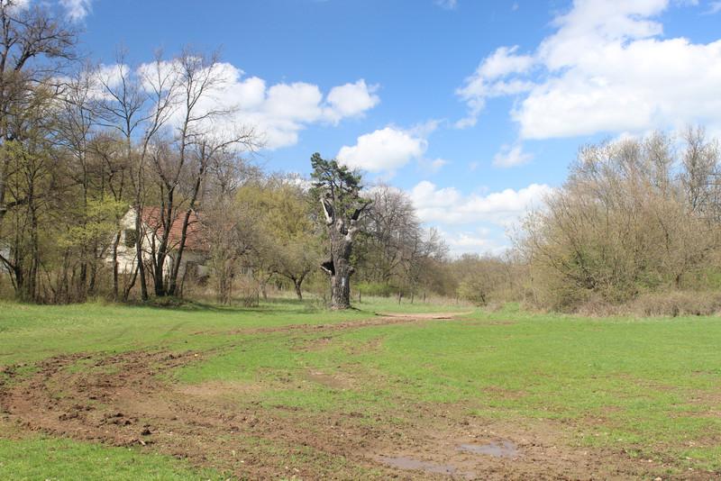 Bánya-hegyi erdészház (fotó: kektura.blog.hu)