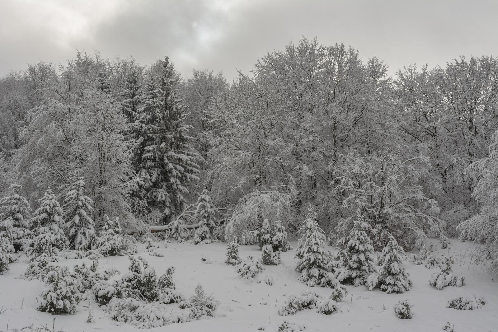 Téli mesevilág a Bükkben