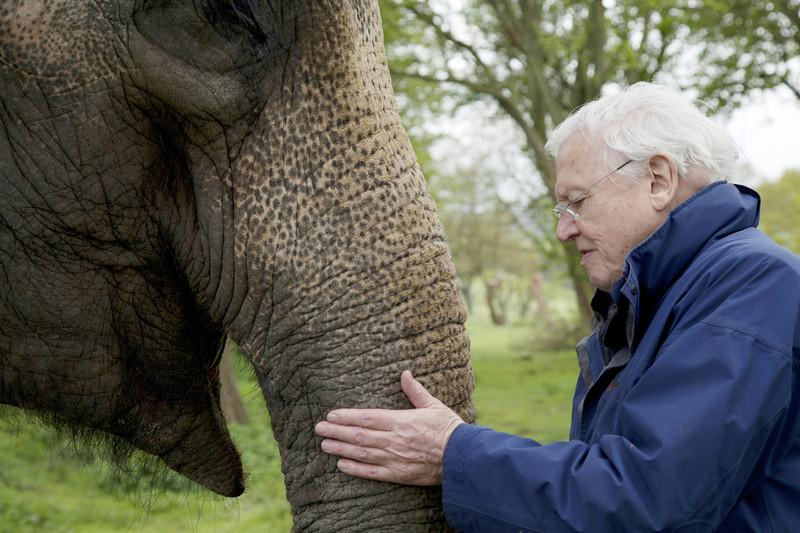 David Attenborough's Natural Curiosities