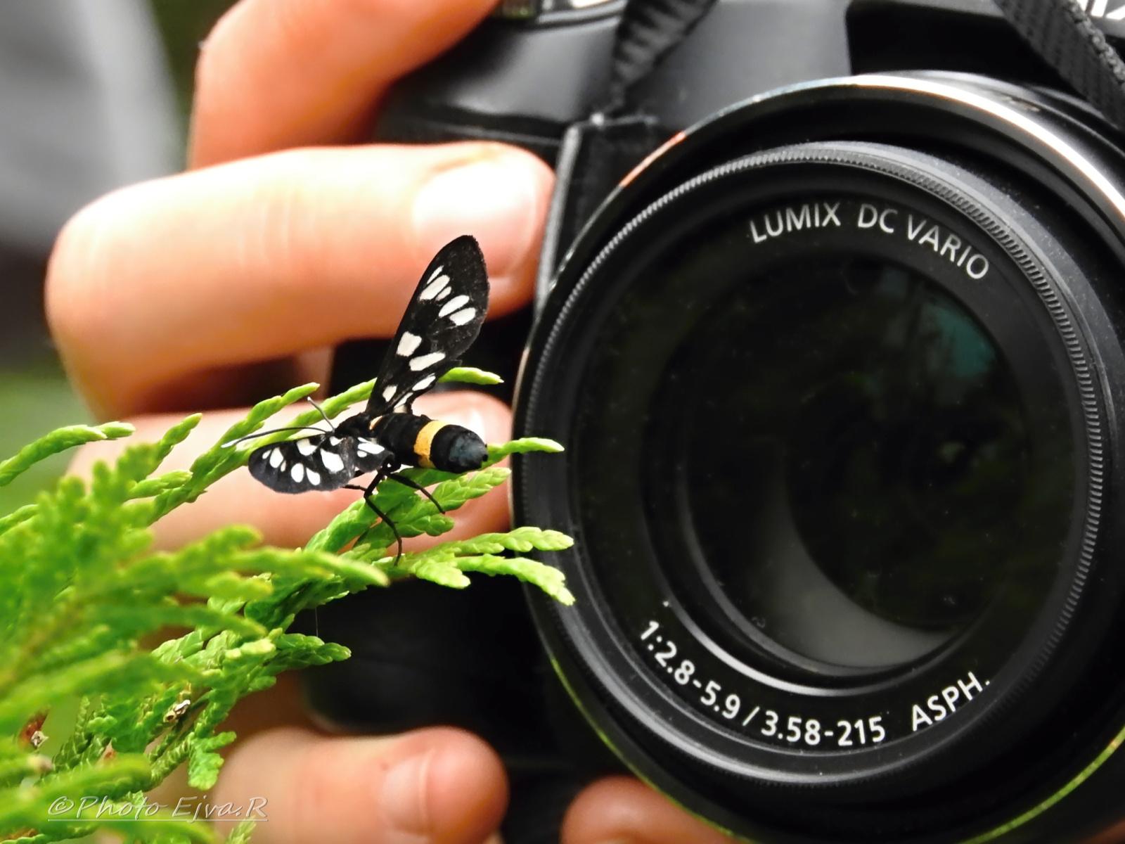 Lepke fotózás
