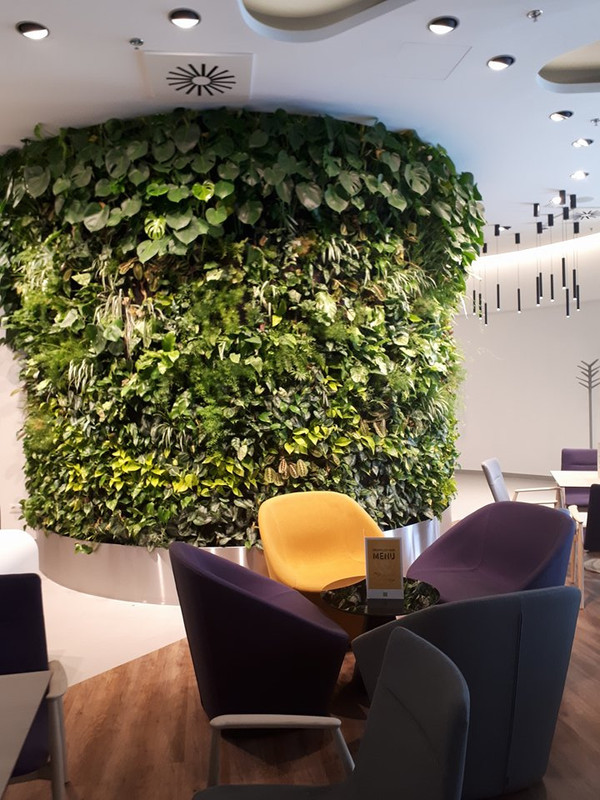 Valódi növények díszítik az előcsarnokot