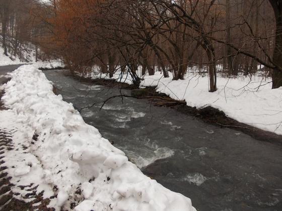 Bővizű patak Királyháza közelében. Fotó: Tarnai Máté