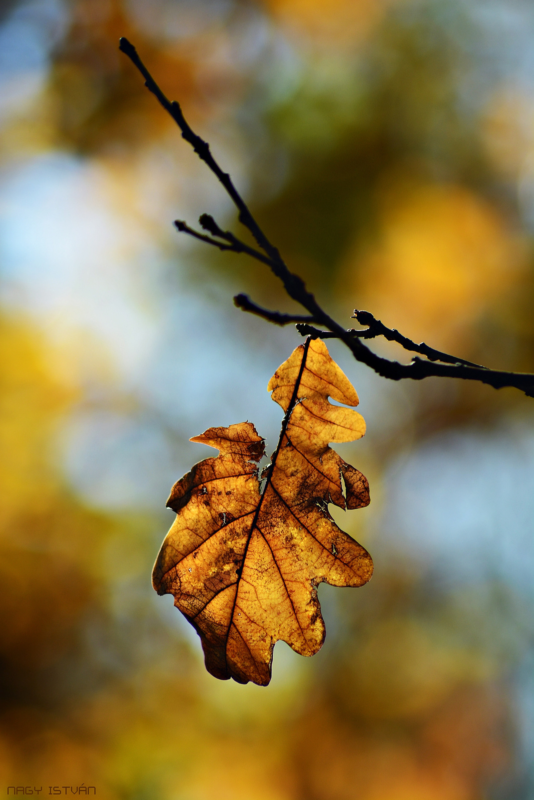 Autumn Leaf 0057