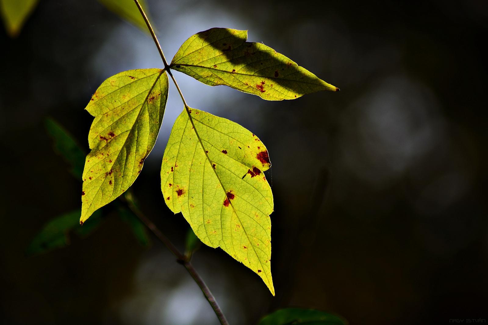 Autumn Leaves 0197