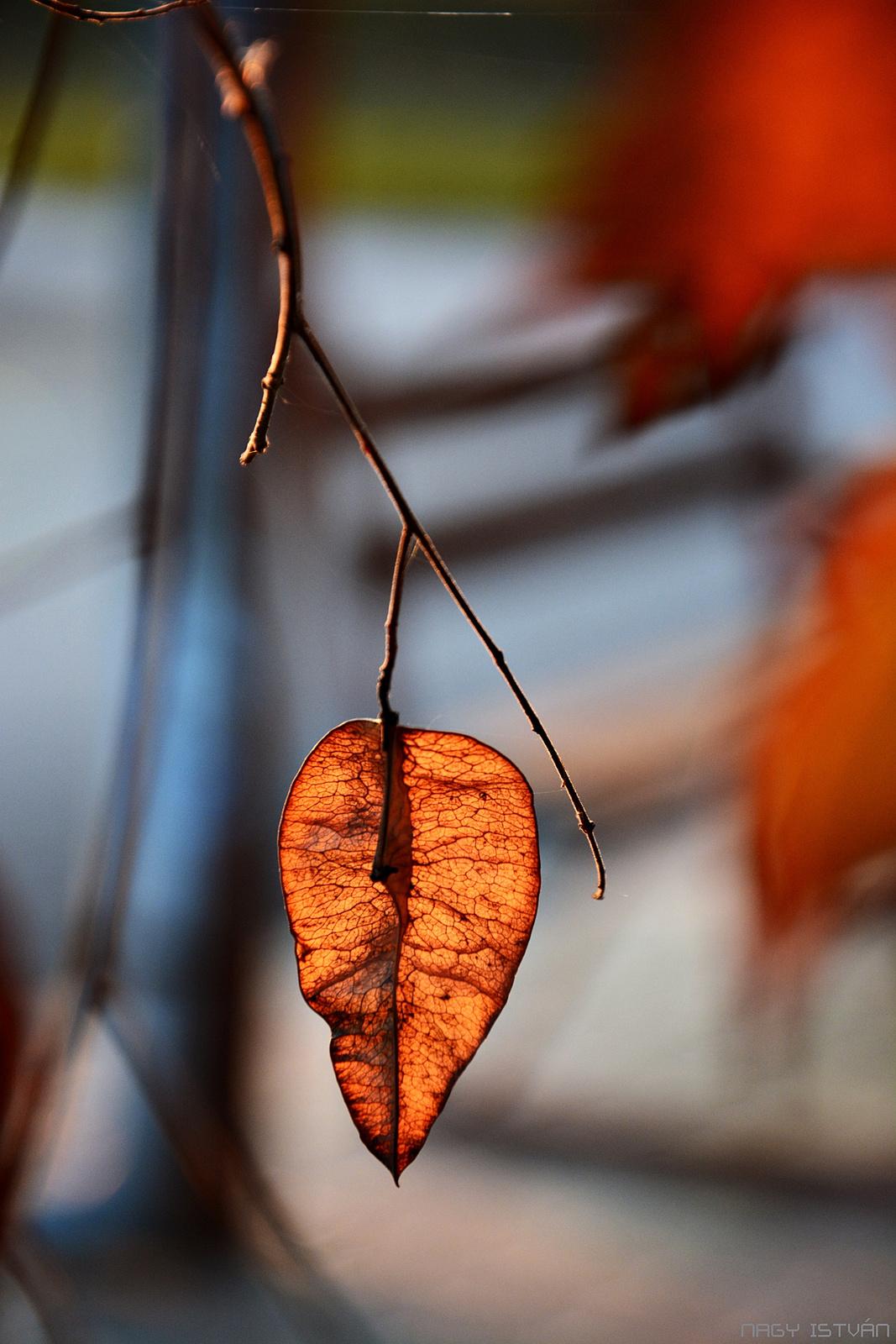 Autumn Leaves 0079