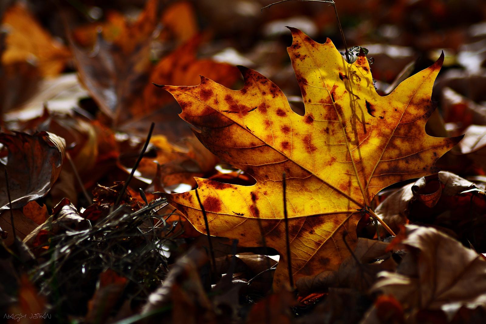 Autumn Leaves 0172