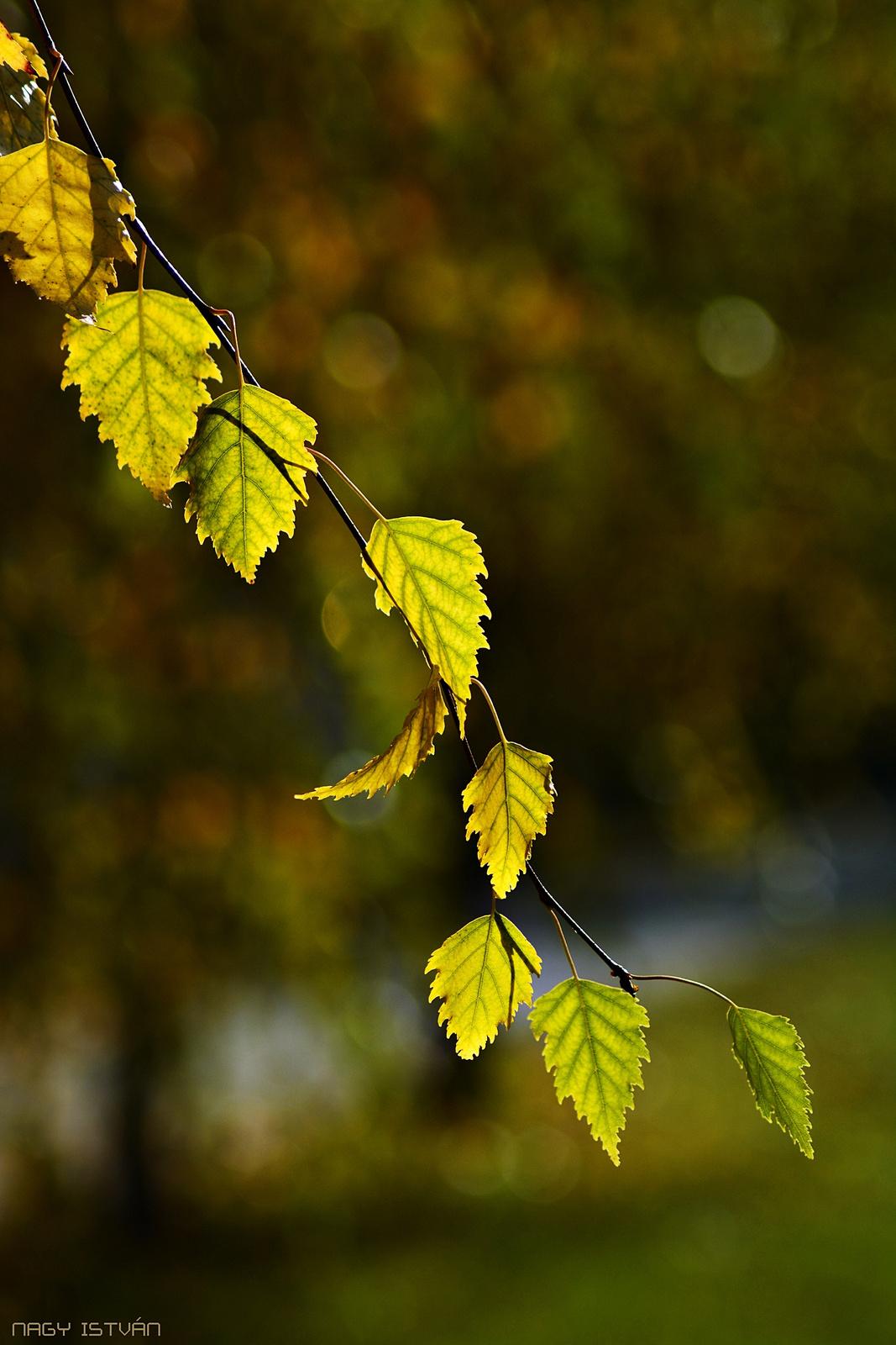 Autumn Leaves 0006