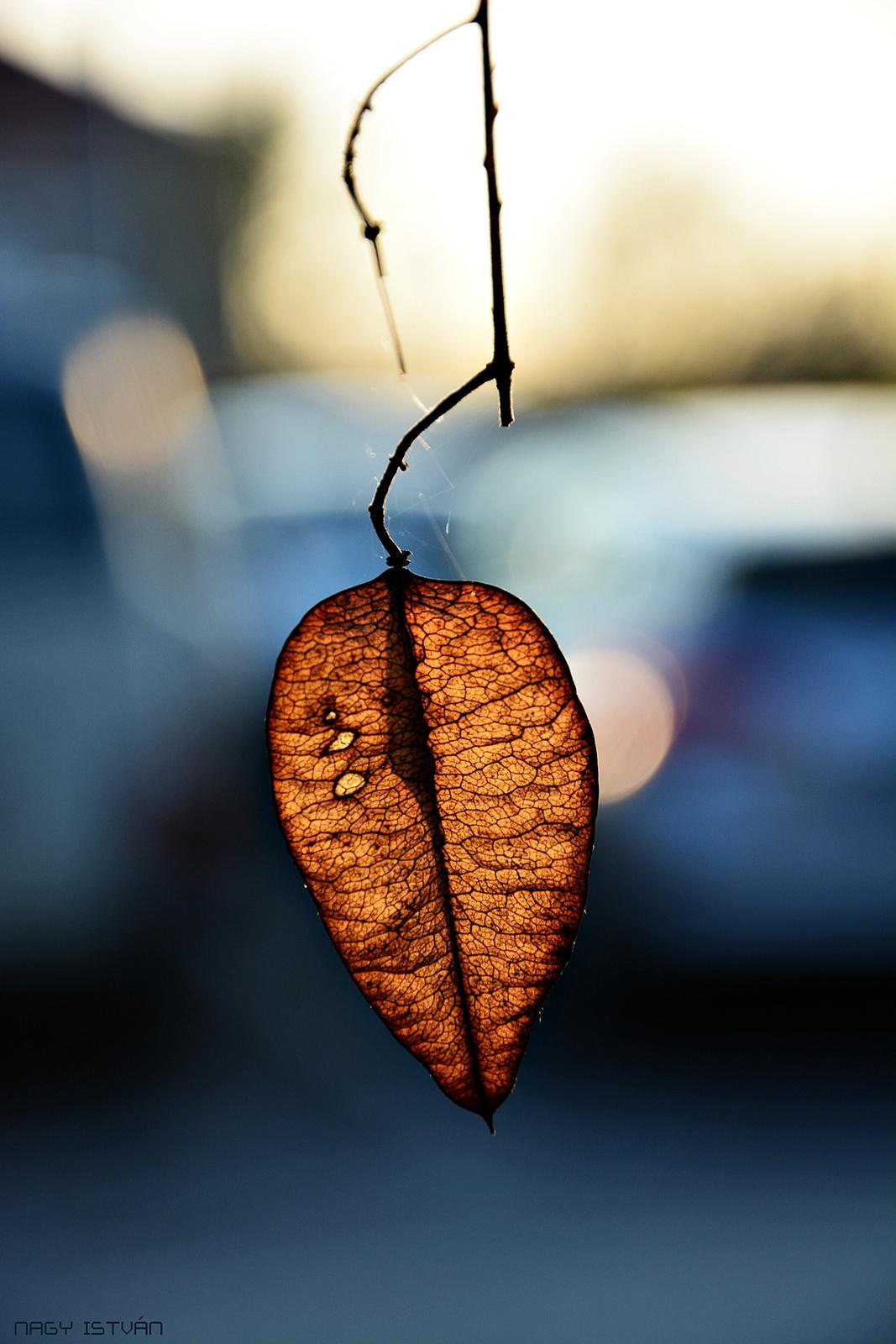 Autumn 0028