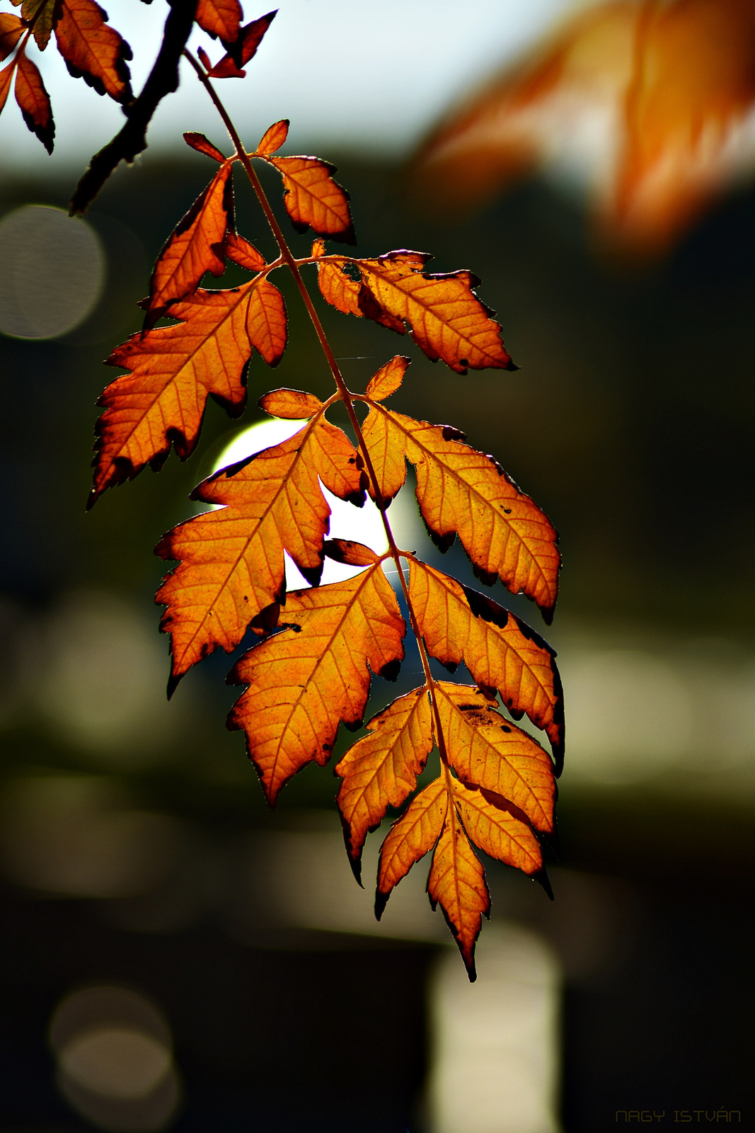 Autumn Leaves 0223