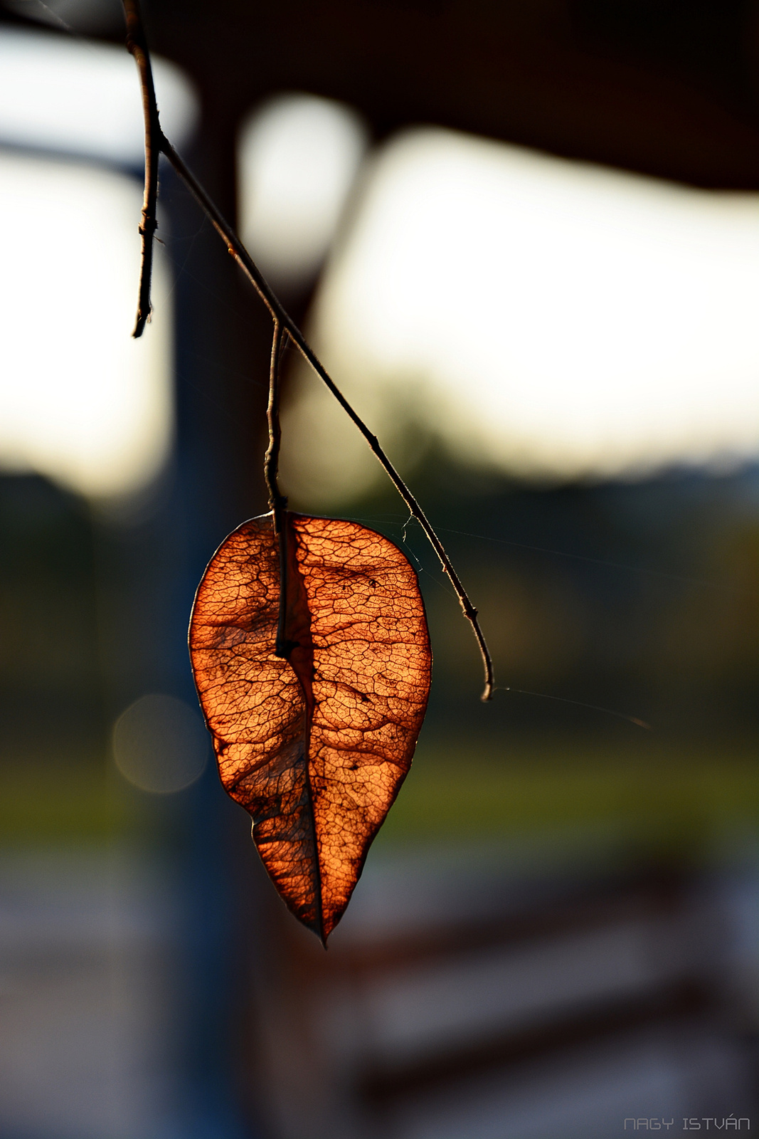 Autumn 0035
