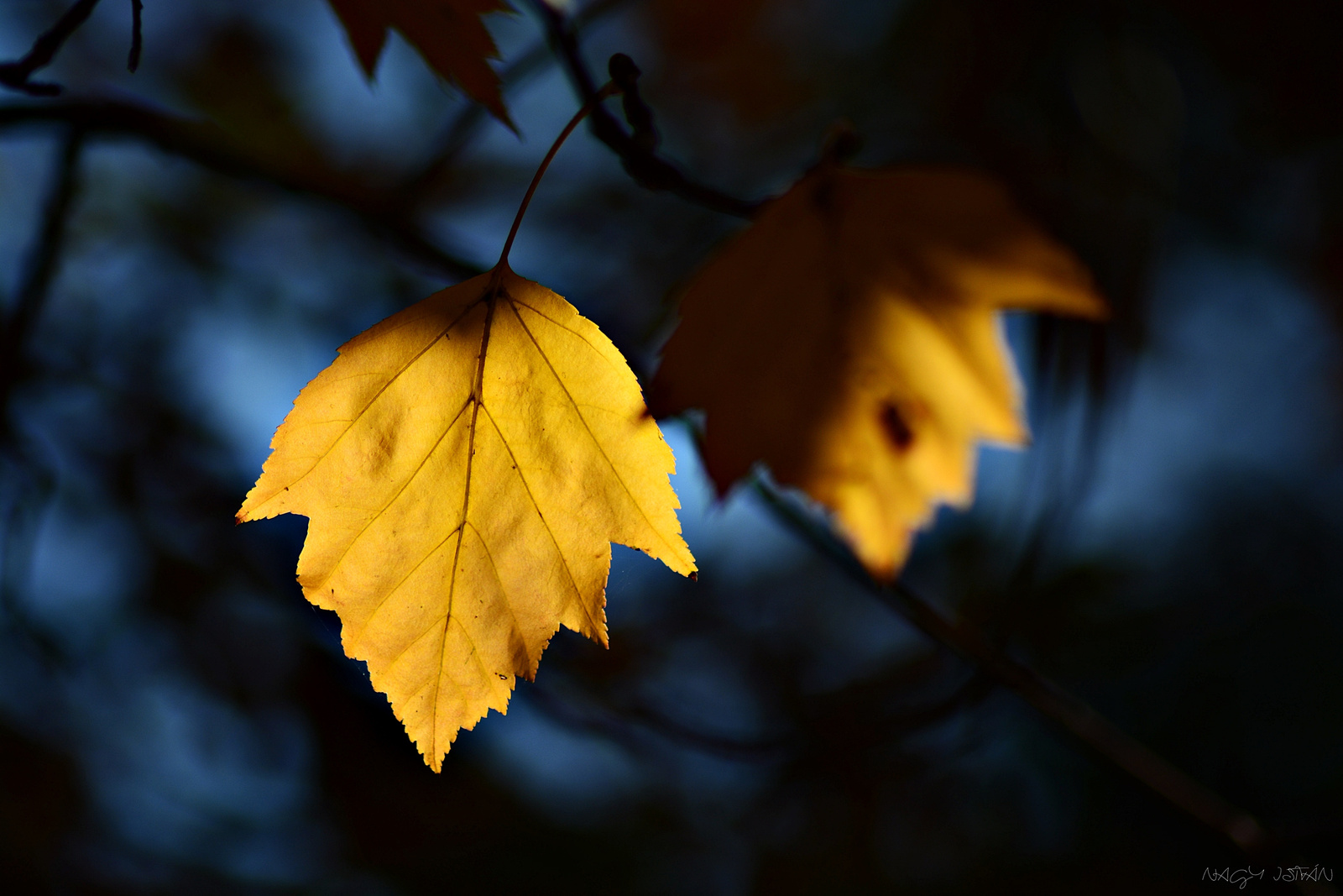 Autumn Leaves 0016
