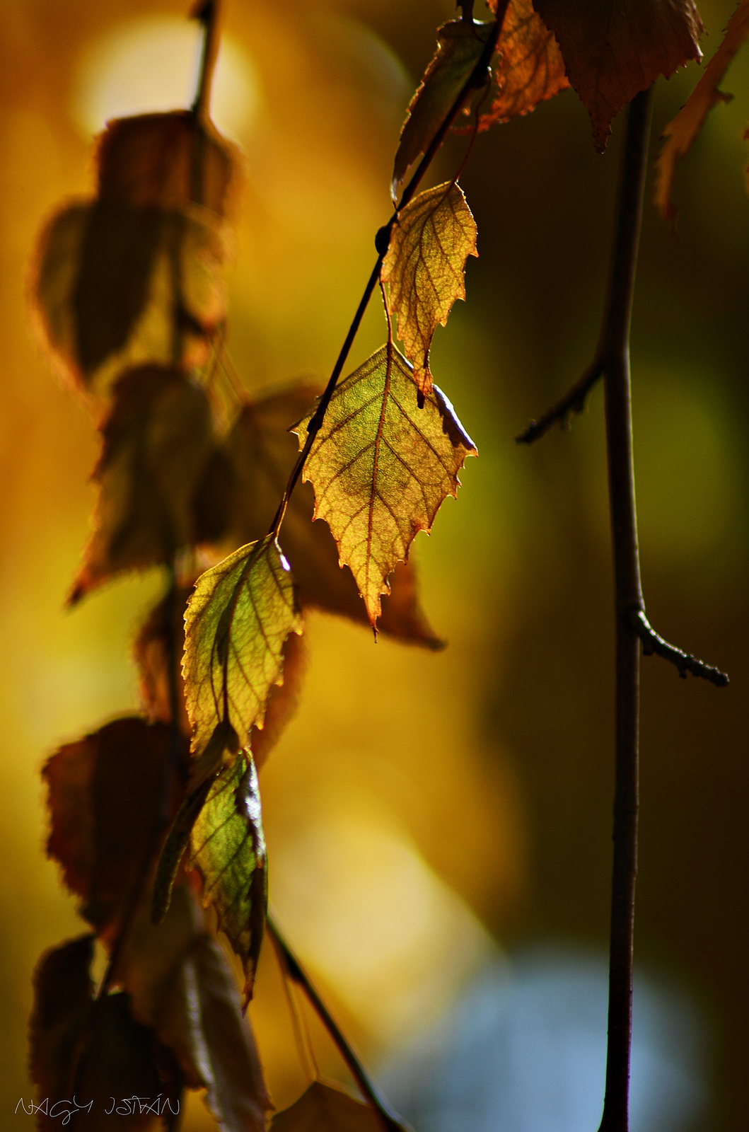 Autumn Leaves 0170