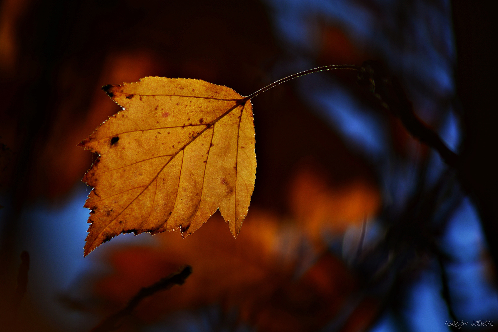 Autumn Leaf 0062