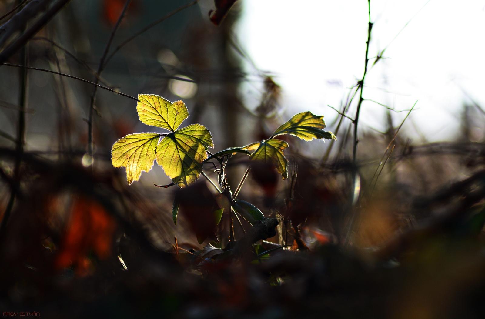 Autumn Leaves 0136