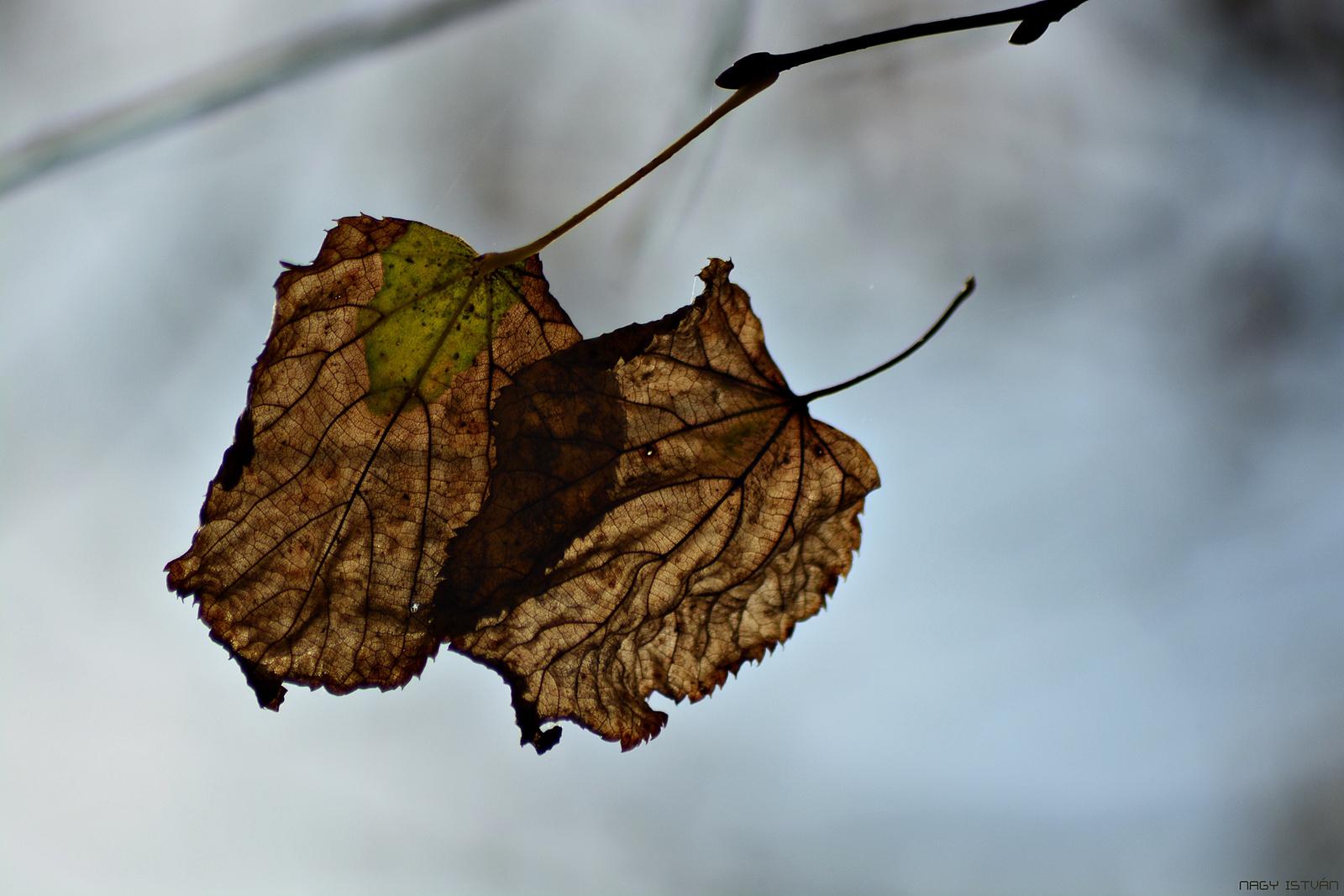 Autumn Leaves 0151