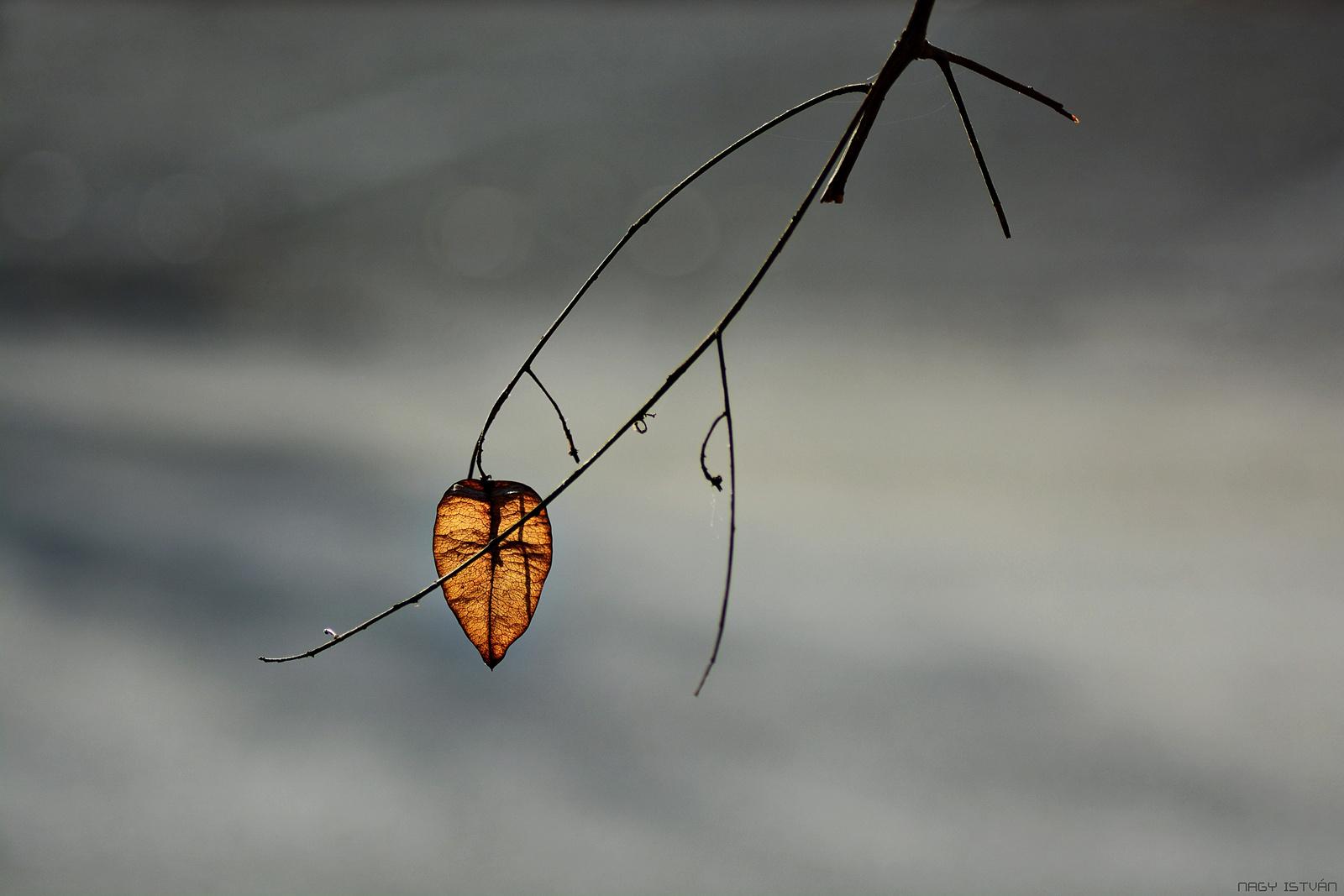 Autumn 0044