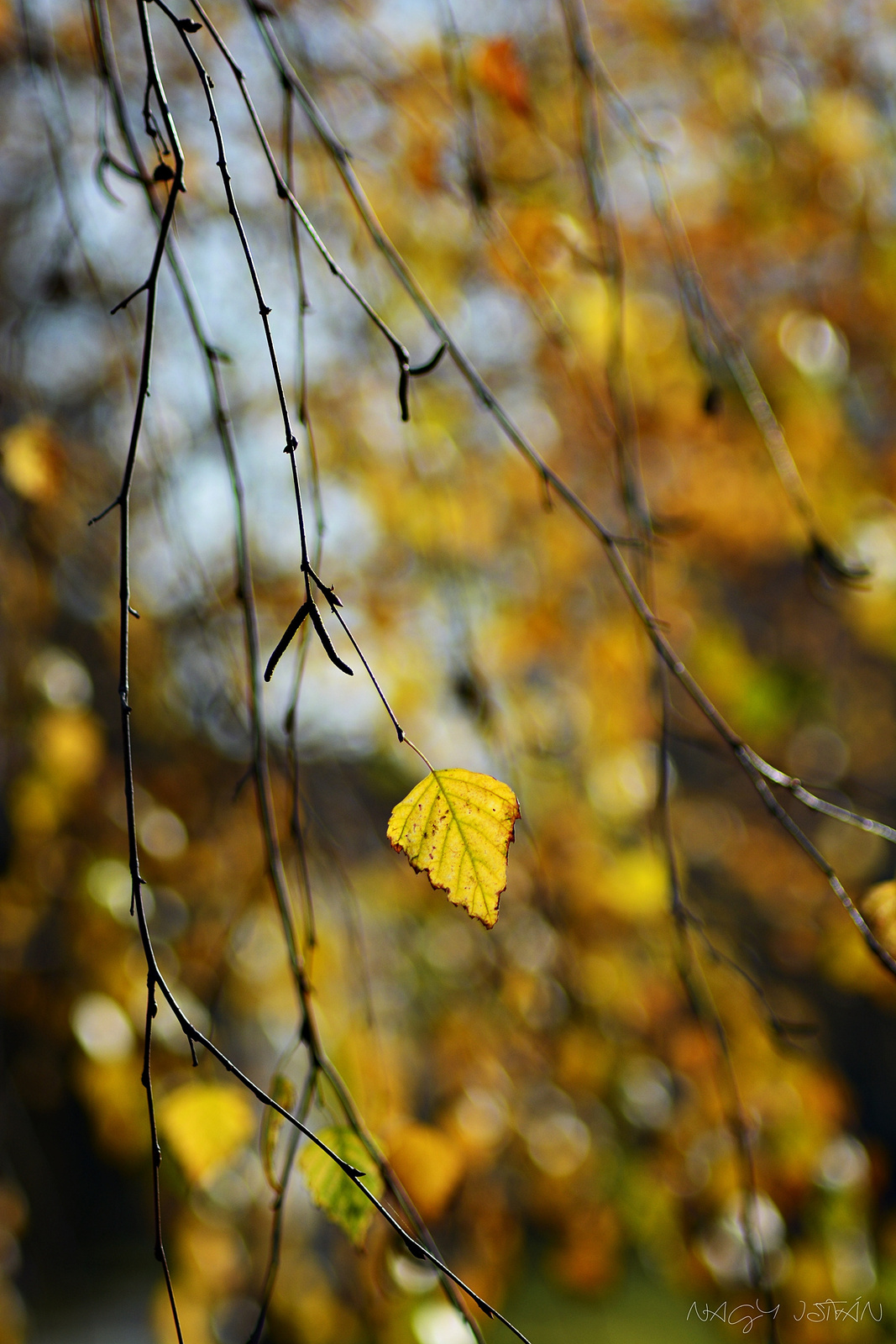 Autumn Leaves 0040