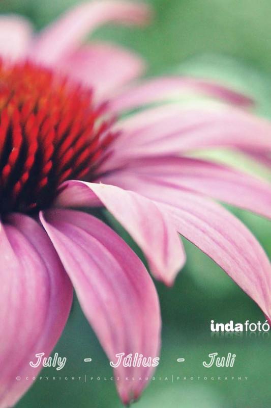 kisklau: virág indafoto 640x960 másolata - indafoto.hu