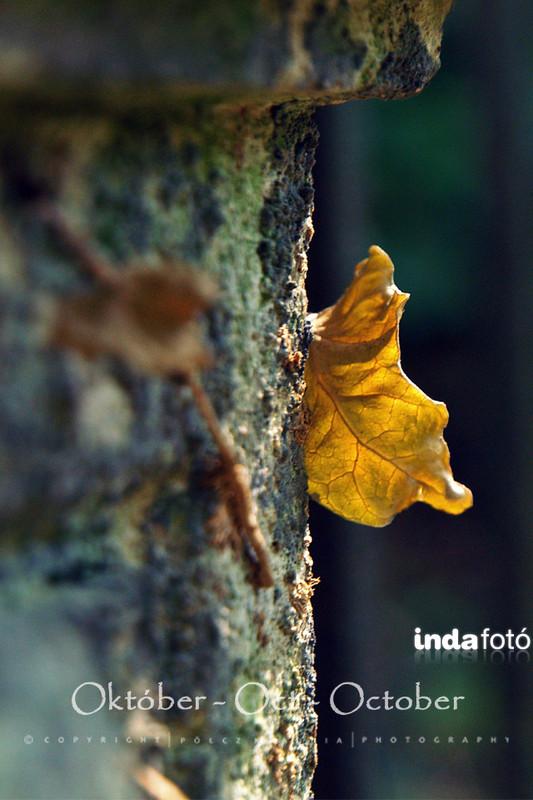 kisklau: 2015 október kisklau 640x960 (2) - indafoto.hu