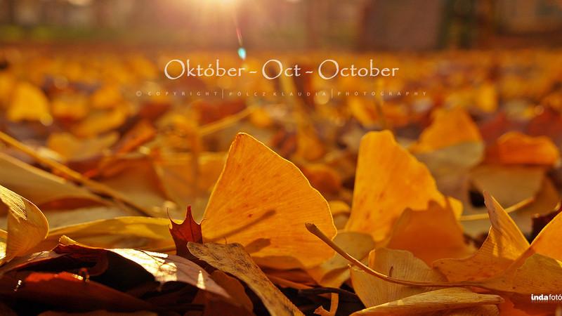 kisklau: 2015 október kisklau 2560x1440 (3) - indafoto.hu