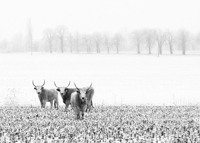 A puszta télen