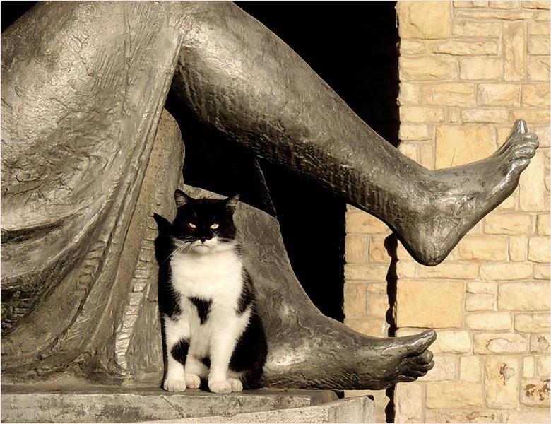 Nem láttál még macskát?