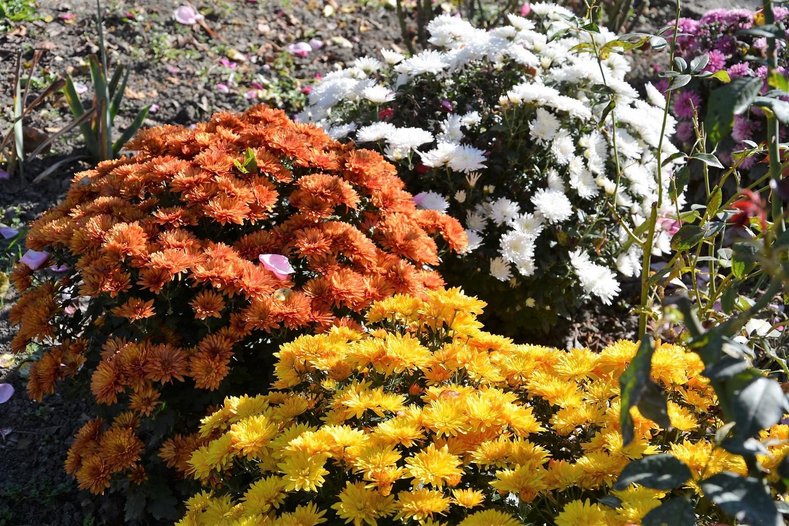 Őszi virágok