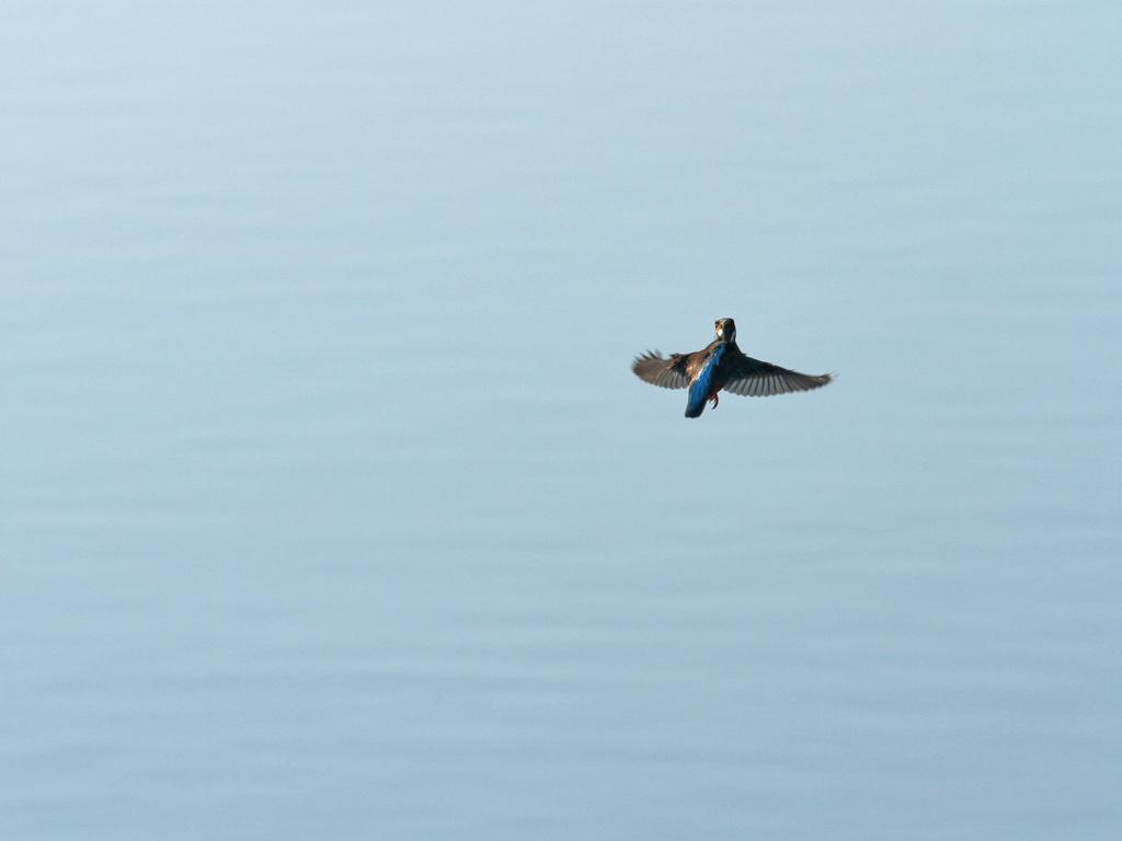 lebegés a víz felett