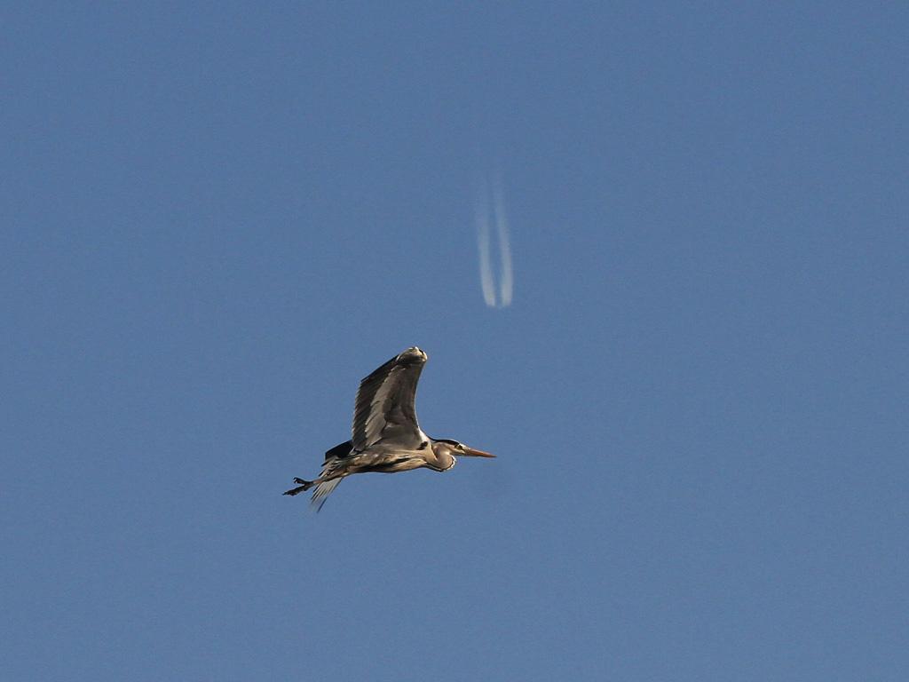 Légiforgalom