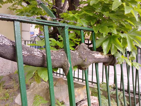 retekblog: Egy ölelés a fától