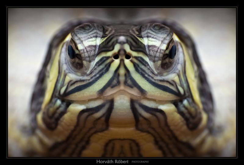 Mikrobi89: Teknős