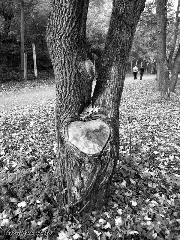 Mary-Ann Fotó: A szeretet fája - indafoto.hu