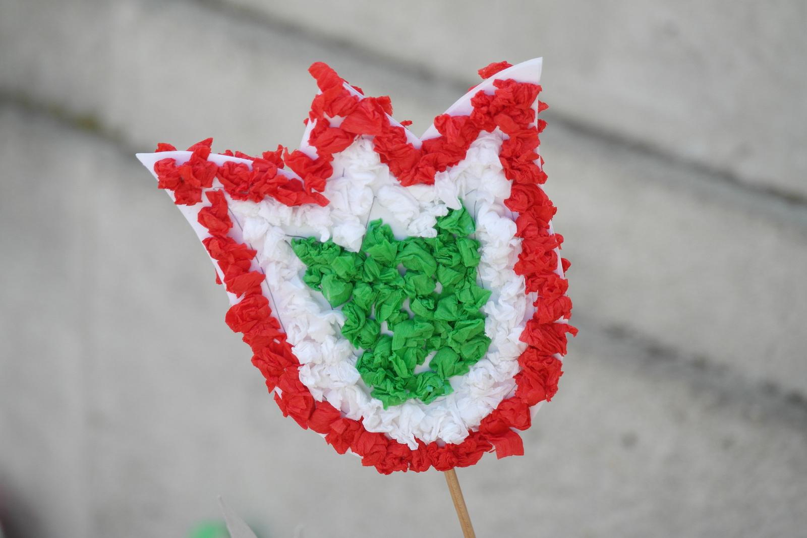 Nemzeti tulipán...