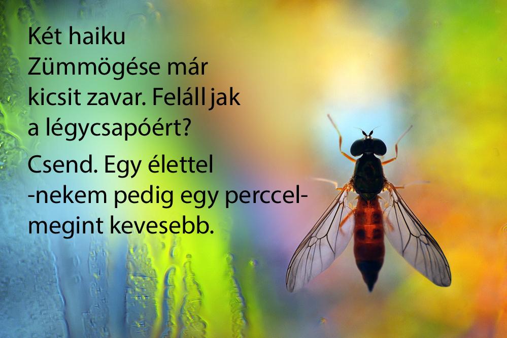 haikuk 15