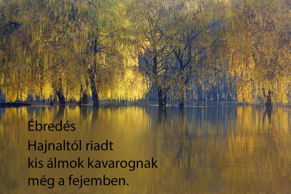 haikuk 88