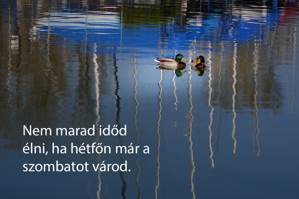 haikuk 95