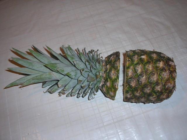 B.B.M: 2. Vágjuk ketté a gyümölcsöt kb. 3 cm távolságra a rozetta tövét