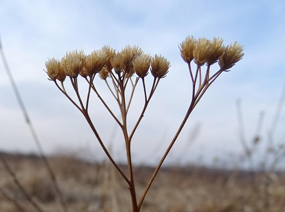 száraz növény 1