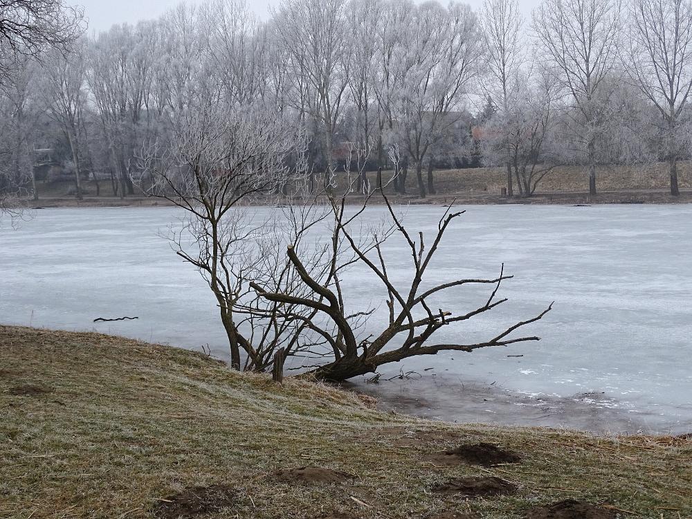 Veresegyház - tó part 8